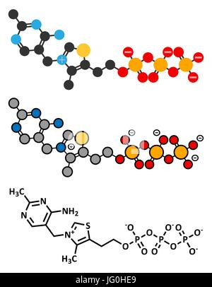Thiamine triphosphate molecule. Conventional skeletal formula and stylized representations. - Stock Photo