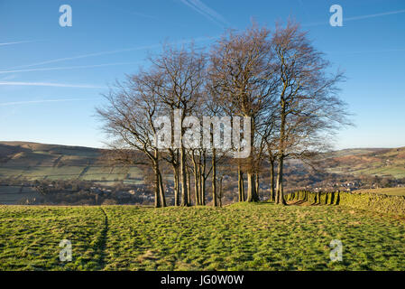 Twenty trees, a group of mature trees on the hillside above Hayfield village in Derbyshire, England. - Stock Photo