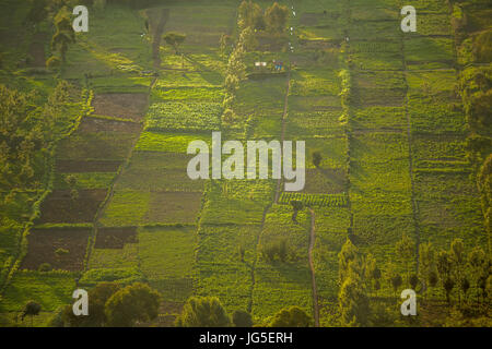 Small squared fields at sunset, Great Rift Valley, Kenya, East Africa - Stock Photo