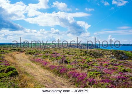 France, Brittany (Bretagne), Finistere department, Roscanvel. Presqu'ile de Crozon, Parc naturel regional d'Armorique. - Stock Photo