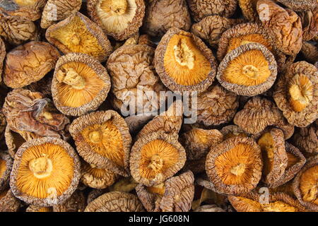 dried shiitake mushrooms closeup as a food background texture - Stock Photo