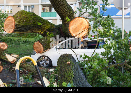 White passenger car crushed by fallen tree after severe storm - Stock Photo