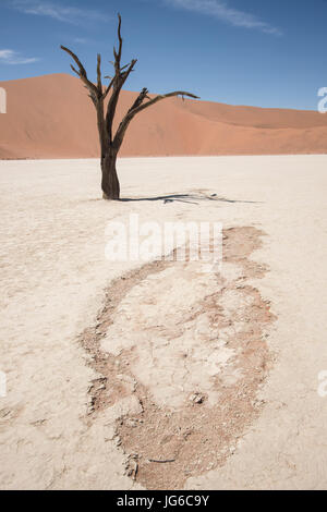 Ancient dead Camelthorn tree (Vachellia erioloba) in Deadvlei, Sossusvlei Salt Pan, Namib Naukluft National Park, Namibia