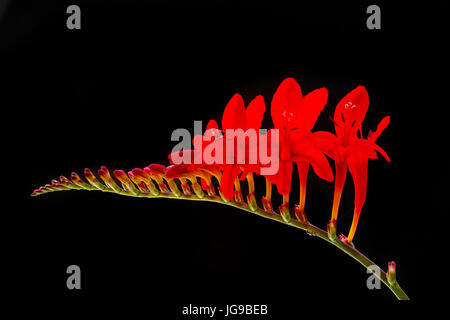 intense, red, warm, stand-out flower - Stock Photo
