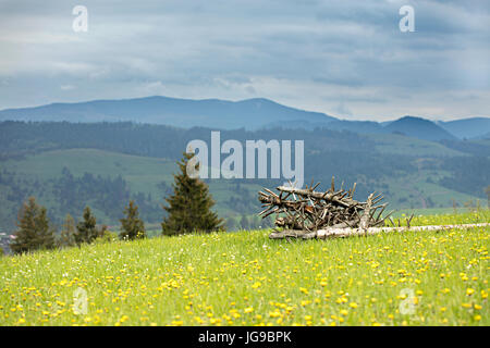 Dry old tree trunks are stacked on the green grass of a mountainous flowering slope against the backdrop of the - Stock Photo