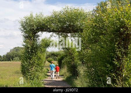 willow symphony, Boizenburg, Mecklenburg-West Pomerania, Germany - Stock Photo