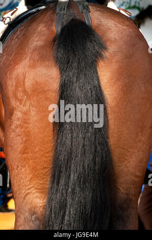 Horse's tail - Stock Photo