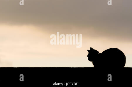 Laying cat black silhouette on a straight line wall. Sunset in the background, with dark clouds, and free empty - Stock Photo