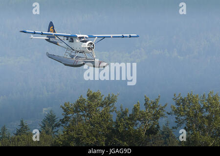 A Classic Harbour Air Seaplanes de Havilland DHC-2 Beaver Flying Low Over Forrest Woodlands In British Columbia, Canada.