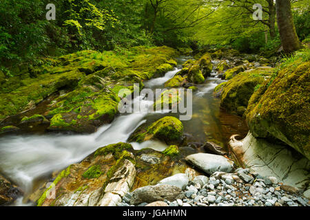 The Shimna River in Tollymore Forest Park in Northern Ireland. - Stock Photo