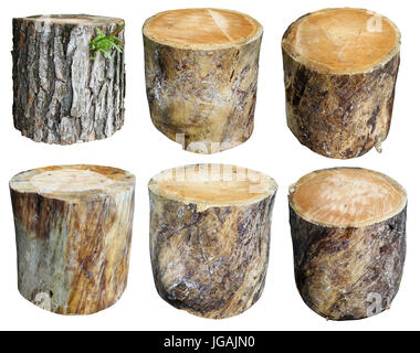 Short thick logs are spiked from the trunk of an old pine tree. Isolated handmade set collage - Stock Photo