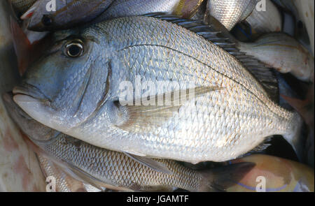 Fish, Vitoria, Espirito Santo, Brazil - Stock Photo