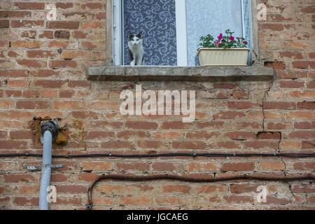 IZHEVSK, RUSSIA - JULY 2, 2017: A cat seen on a windowsill of a dilapidated residential house in Chapayev Street. - Stock Photo