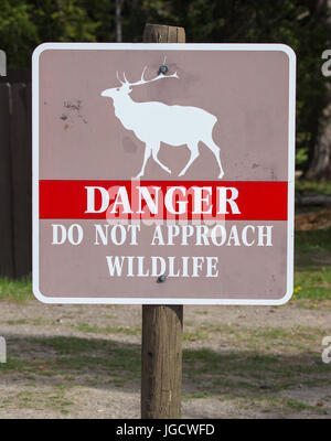 Warning sign at West Thumb Geyser Basin in Yellowstone National Park stating 'Danger - Do not approach wildlife' - Stock Photo