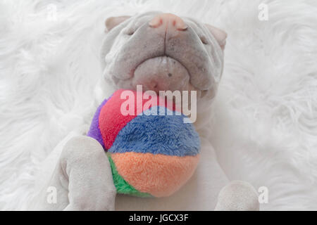 shar-pei dog lying on its back with a ball - Stock Photo