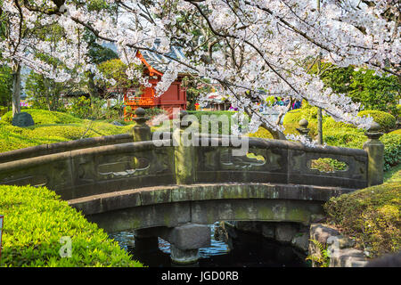 a stone bridge with cherry blossom trees in asakusa tokyo japan stock
