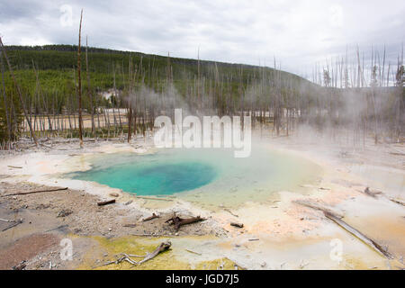 Cistern Spring, Back Basin, Norris Geyser Basin, Yellowstone National Park - Stock Photo