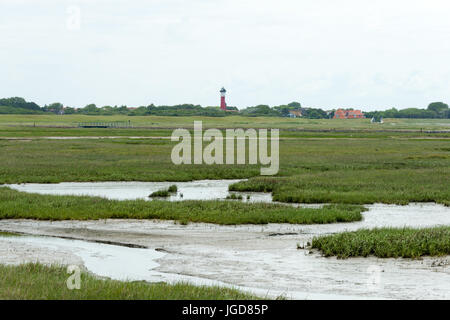 WANGEROOGE, GERMANY.  04th July 2017:  view of the dunes of the national park wadden sea on the island wangeroog, - Stock Photo