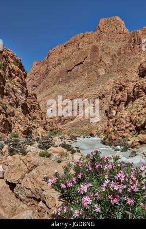oberer Teil der Todra-Schlucht, Tinghir, Marokko, Afrika |upper part of Todgha Gorge,  Tinghir, Morocco, Africa| - Stock Photo
