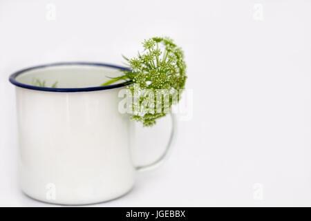 Minimal Still life - Dill flower in white pot.  Ammi majus in white pot on white back ground. Stock Photo