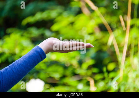 Young womans hand with sunflower seeds held out for bird feeding outside - Stock Photo