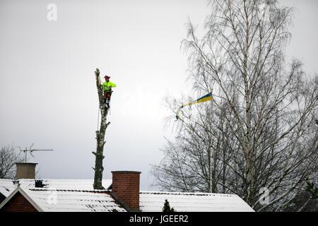 Tree Cutting Specialist - Stock Photo
