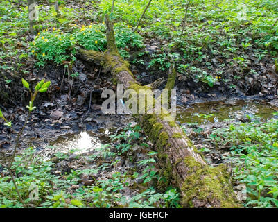 an old tree fallen across the stream, Russia - Stock Photo