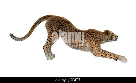 3D rendering of a cheetah isolated on white background - Stock Photo