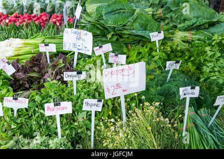 Herb stand at a local farmers market in Virginia during the summer morning - Stock Photo
