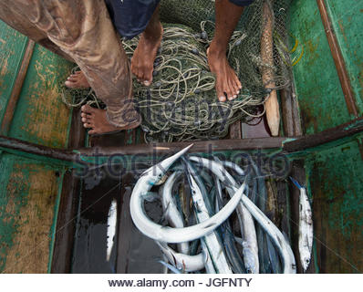 Bajau fishermen and their catch in a dugout canoe off Selakan Island. - Stock Photo