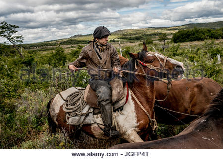 A bagualero, or cowboy who captures feral livestock, on a day trip with livestock. - Stock Photo