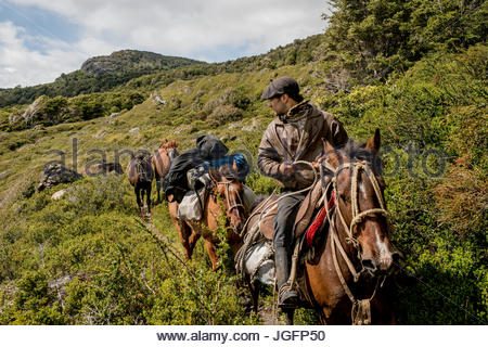 A bagualero, or cowboy who captures feral livestock, brings horses to a ranch. - Stock Photo
