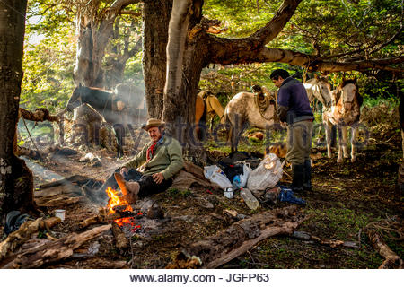 Bagualeros, cowboys who capture feral livestock, eat breakfast and load horses on a trip. - Stock Photo