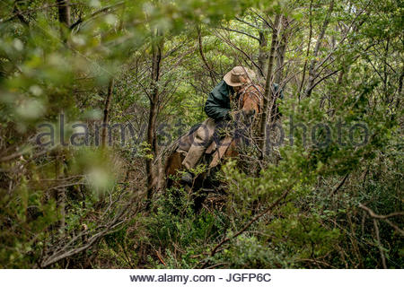A bagualero, a cowboy who captures feral livestock, hacks a trail through the forest on horseback. - Stock Photo