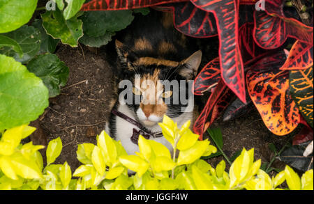 Curious white, brown and black cat hiding on a garden - Stock Photo