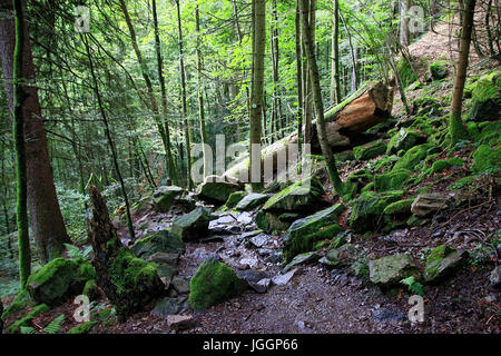 Hiking through the woods of the mountain Schauinsland in the Black Forest, Germany - Stock Photo