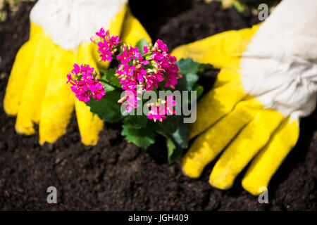 Cropped hands of person wearing yellow gloves planting flowers at lawn - Stock Photo