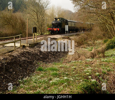 Snowdrops are in bloom beside the South Devon Railway at Nappers Halt, as a steam train approaches, hauled by GWR - Stock Photo