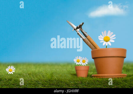 Large and small plant pots containing English Daisy flowers and potting tools on a grassy lawn against a bright blue sky.  A white fluffy cloud floats