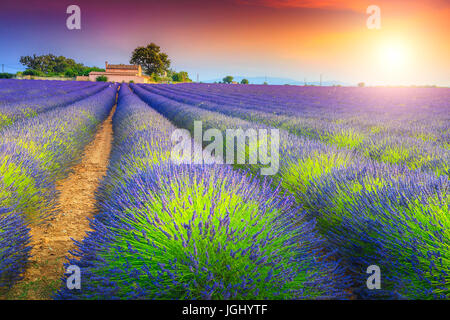 Stunning sunset landscape and violet lavender fields near Valensole village, Provence region, France, Europe - Stock Photo