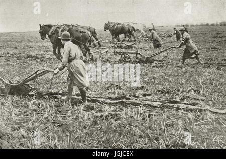 Women ploughing in Surrey, World war 1 - Stock Photo