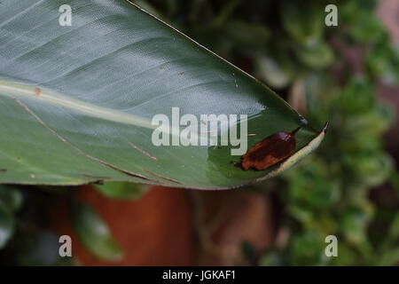 Small ant and a small puddle of rain water on a large green leaf in landscape format - Stock Photo
