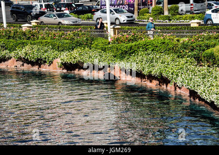 Las Vegas, USA - May 7, 2014: Bellagio hotel fountain being cleaned by employee during day in Nevada - Stock Photo