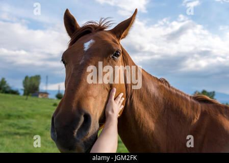 The hand of a woman is stroking a horse at sunset - Stock Photo