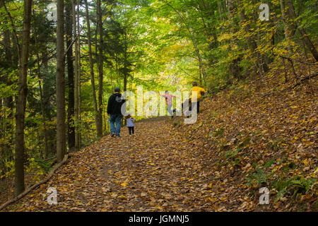 A man and three children playing and walking on a leaf covered path in the woods. - Stock Photo
