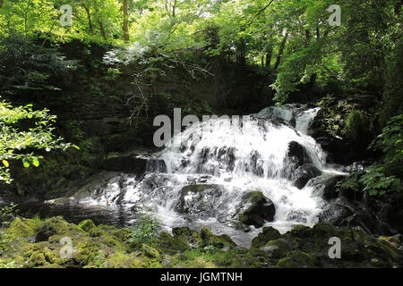 Fairy Falls, Trefriw, Conwy Valley - Stock Photo