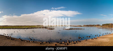 A view of the main lake busy with swans, geese, ducks and waders at the Wildfowl and Wetlands Trust's Martin Mere - Stock Photo