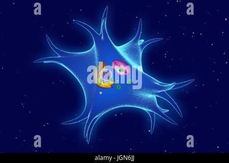 Illustration of a melanocyte from the skin. Melanocytes produce the pigment melanin. - Stock Photo