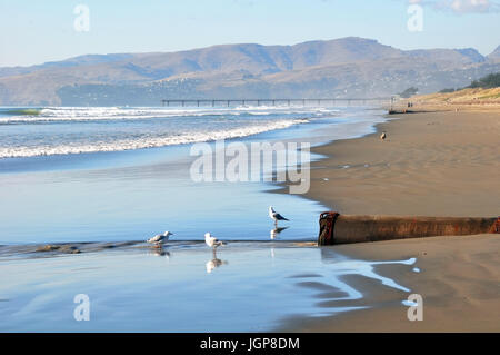 Pristine Brighton beach on a perfect summer day is deserted except for seagulls in the foreground. Christchurch, - Stock Photo