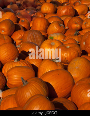 pumpkins, pumpkins, pumpkins - Stock Photo